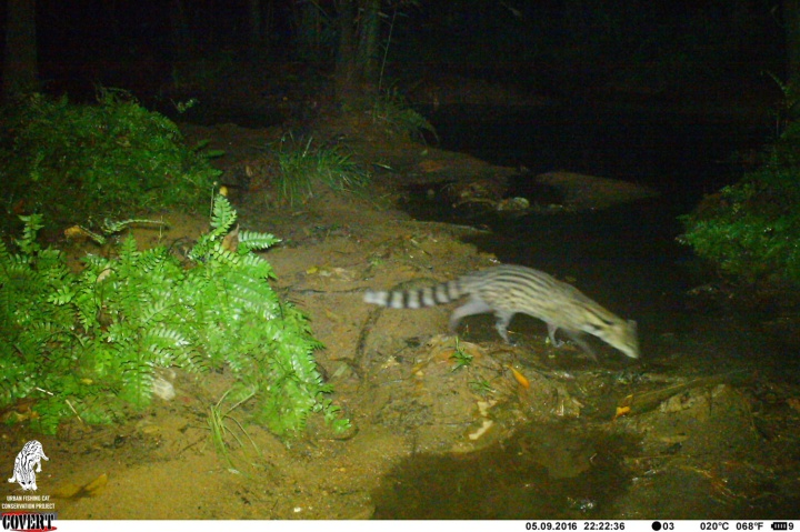 Citizen science – (Camera) trap fishing cats and other urban wildlife!