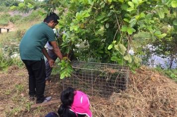Preparing the trap cage