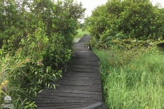 An-Urban-Wetland.-A-Walk-in-the-Park10