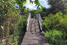 An-Urban-Wetland.-A-Walk-in-the-Park11