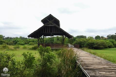 An-Urban-Wetland.-A-Walk-in-the-Park6