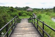 An-Urban-Wetland.-A-Walk-in-the-Park9