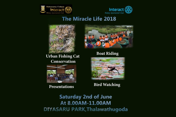 The Miracle Life 2018